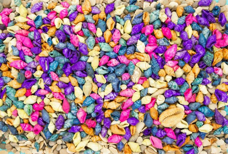 五颜六色的贝壳背景 库存照片