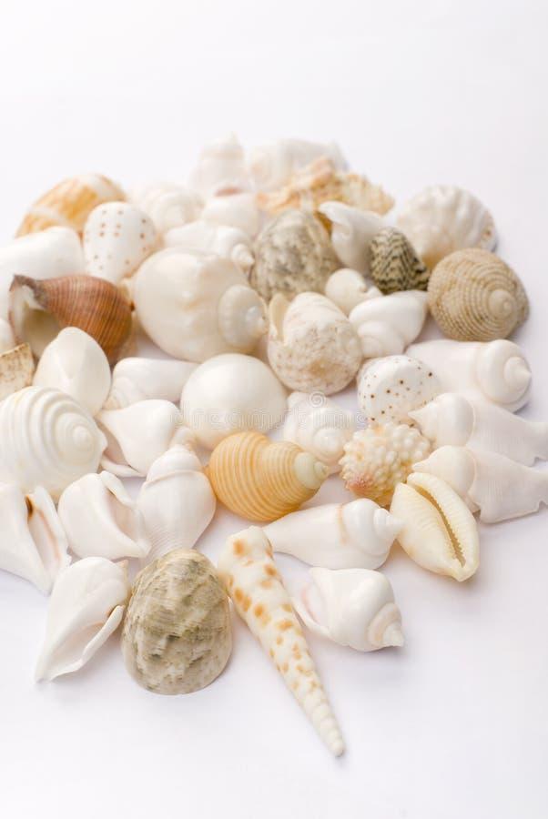 五颜六色的贝壳 库存图片