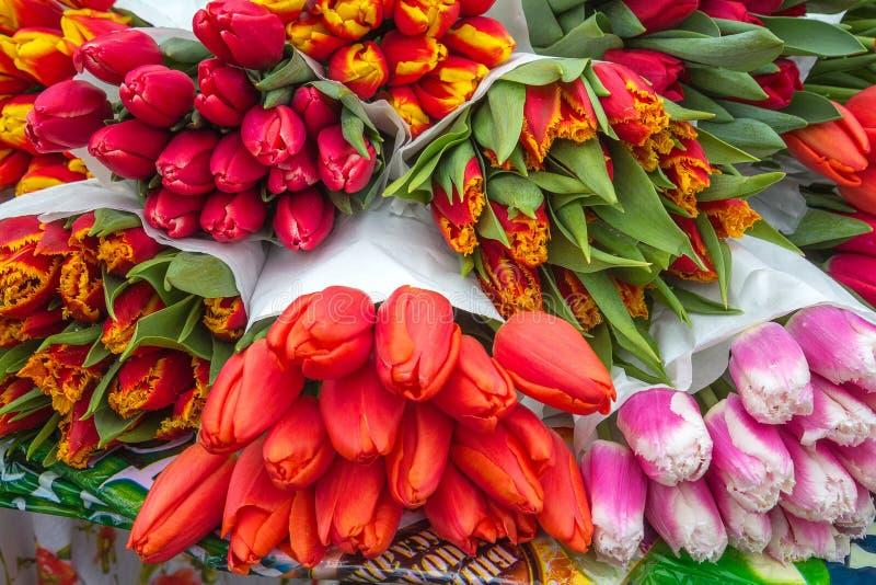 五颜六色的郁金香花卉背景  免版税库存照片