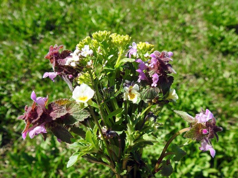 五颜六色的野花花束,立陶宛.