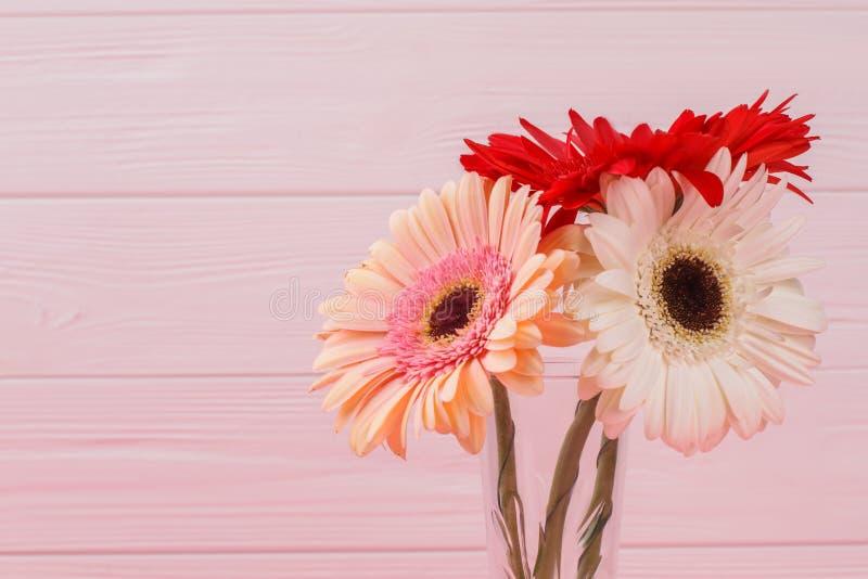五颜六色的雏菊头状花序 库存照片
