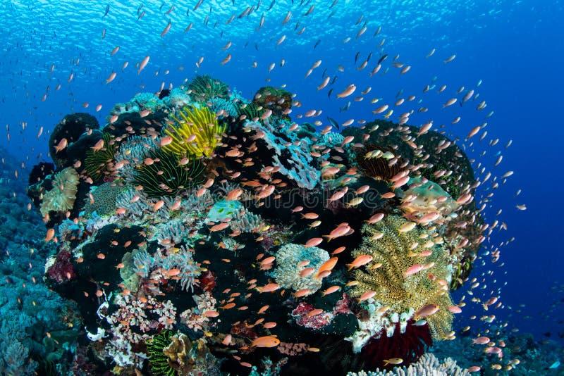 五颜六色的鱼和充满活力的礁石在阿洛 免版税库存照片
