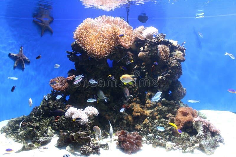 五颜六色的鱼和珊瑚 免版税库存图片