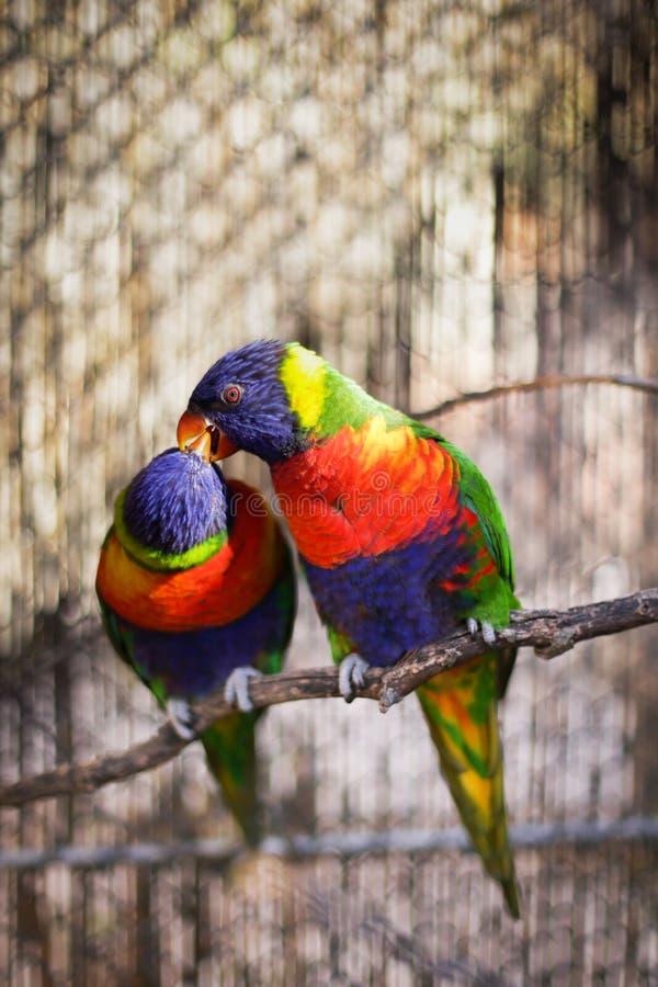 五颜六色的鸟 库存图片