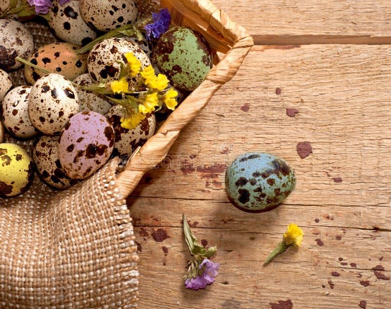 五颜六色的鹌鹑蛋 愉快的复活节 库存图片