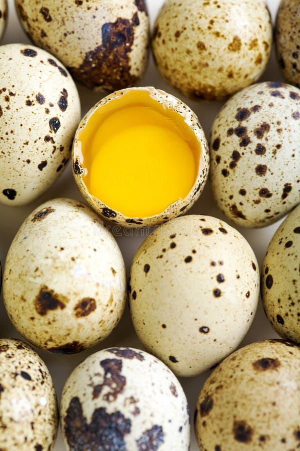 五颜六色的鹌鹑蛋 免版税库存图片