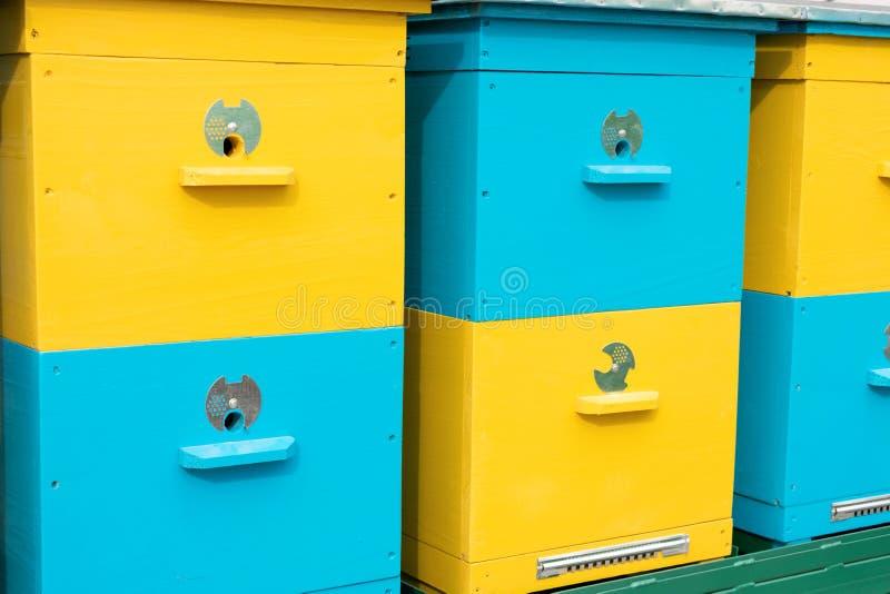 五颜六色的黄色和蓝色蜂蜂房连续在蜂房,养蜂,养蜂业,蜂围场 蜂蜜蜂殖民地,共同地人的 免版税库存图片