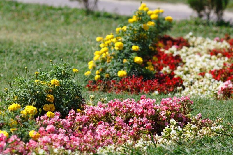 五颜六色的黄色花在公园,选择聚焦 免版税库存照片