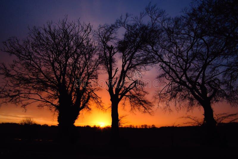 五颜六色的黎明和现出轮廓的tree& x27; s 库存图片