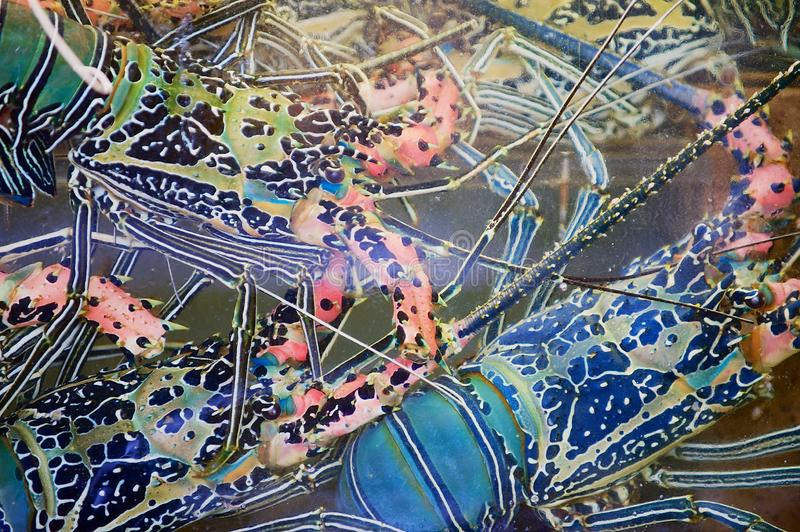五颜六色的龙虾在湿被抓的摊位玻璃后的水中在海鲜市场上在香港,中国 免版税库存图片