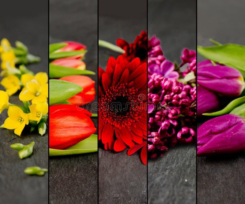 五颜六色的绽放混合 库存照片