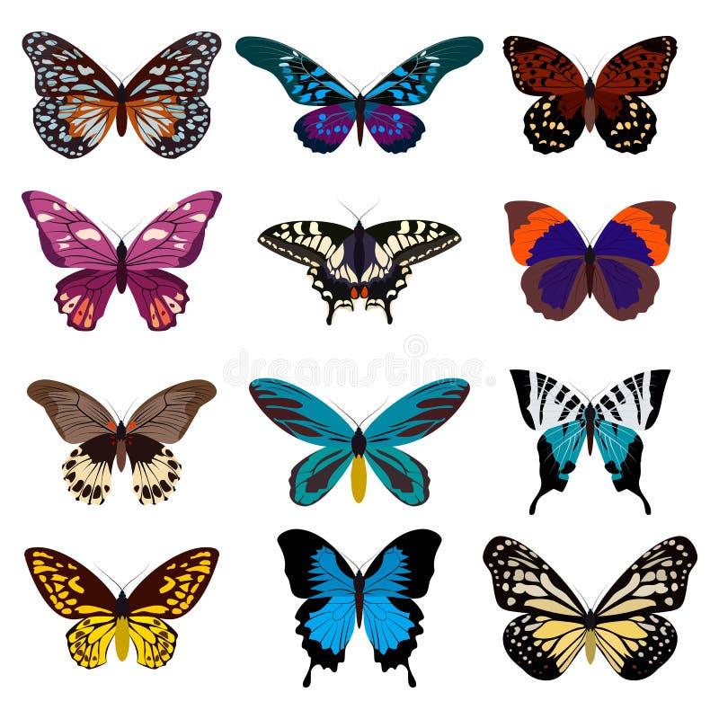 五颜六色的蝴蝶的大收藏 蝴蝶查出白色 也corel凹道例证向量 库存例证