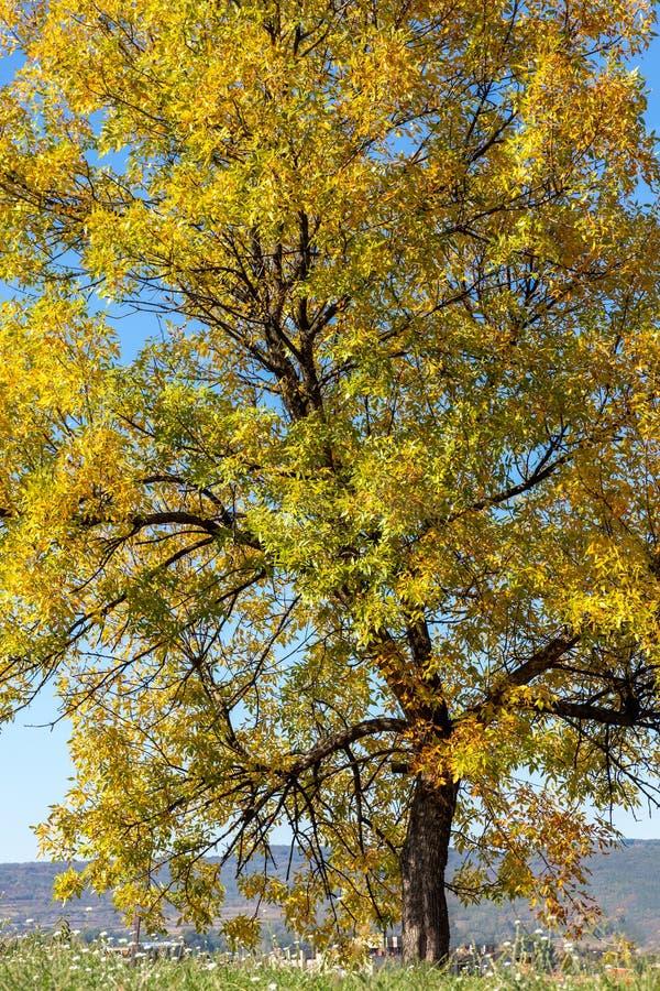 五颜六色的Autmn树-惊人的秋天颜色 库存图片