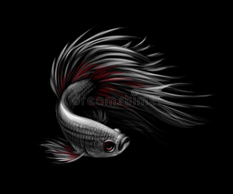 五颜六色的Betta鱼,在运动的暹罗战斗的鱼 向量例证