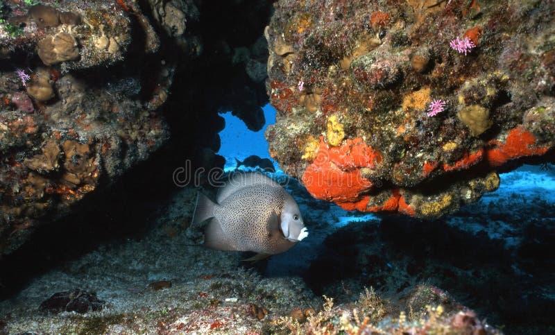 五颜六色的cozumel礁石 库存图片