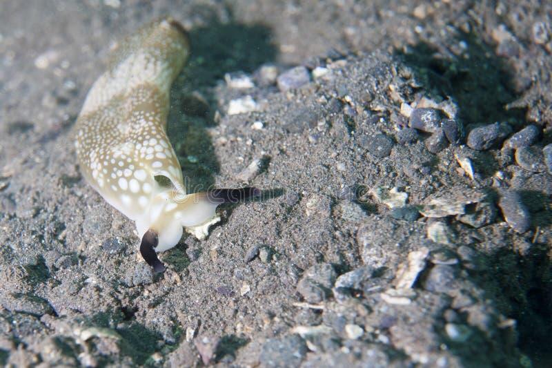 五颜六色的Nudibranch画象 库存图片