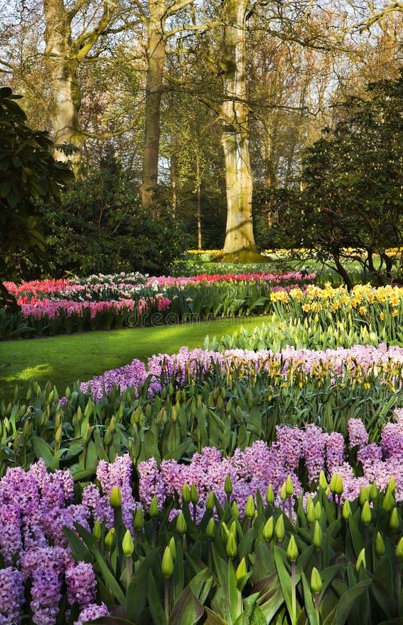 五颜六色的springflowers在公园 免版税库存照片
