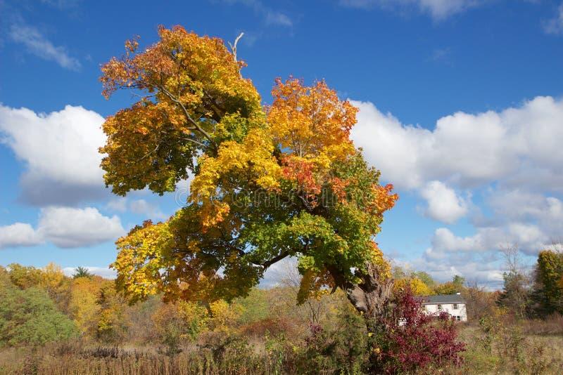 五颜六色,粗糙的树在秋天 免版税库存照片