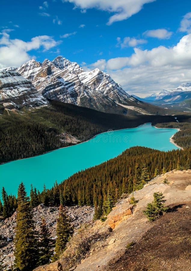 亚伯大banff加拿大湖找出国家公园peyto 库存照片