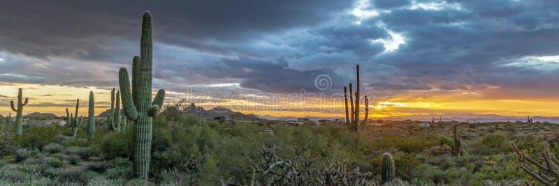 亚利桑那与柱仙人掌仙人掌菲尼斯地区的日落风景 库存照片