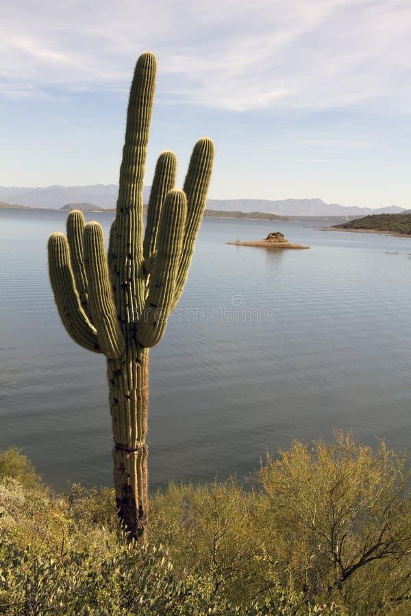 亚利桑那仙人掌孤立沙漠的湖 图库摄影