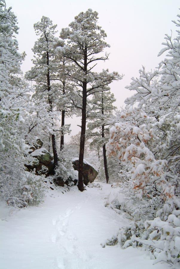 亚利桑那场面冬天 免版税库存照片
