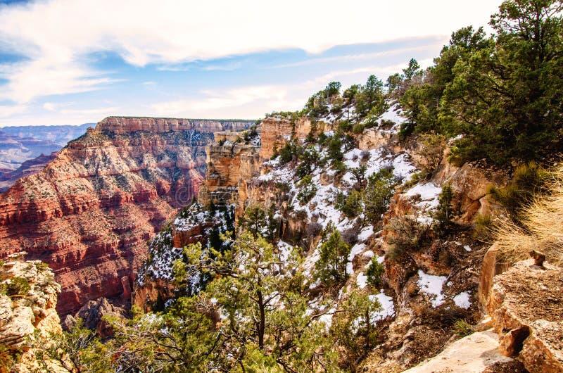 亚利桑那州南缘大峡谷冬天雪松鼠 免版税库存照片