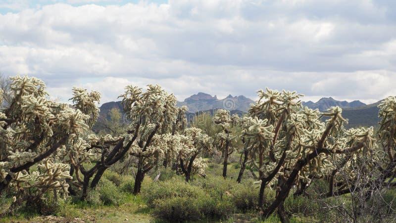 亚利桑那当地风景 免版税库存照片