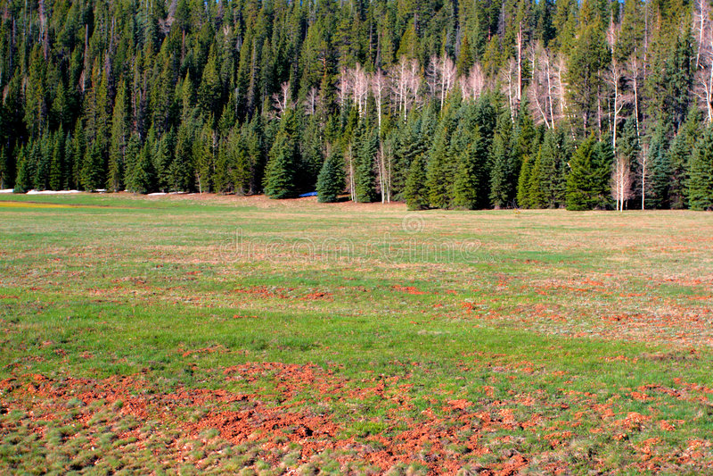 亚利桑那森林kaibab国家美国 免版税库存照片