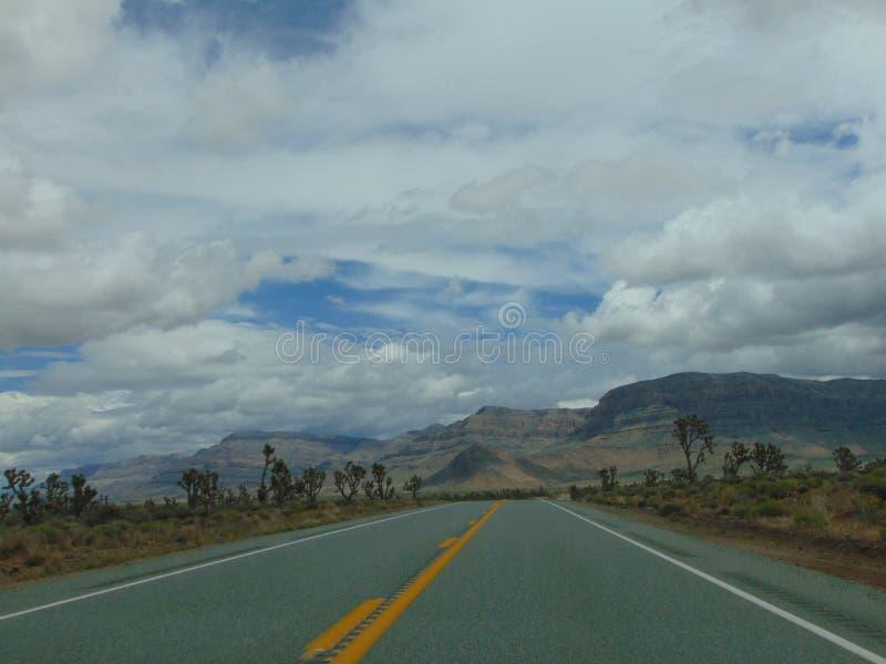 亚利桑那沙漠和约书亚树森林 库存图片