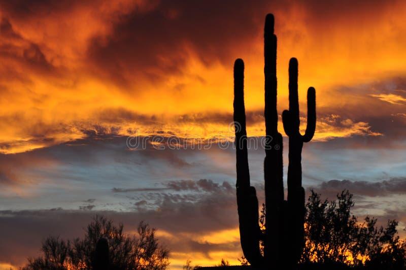 亚利桑那沙漠日出 免版税库存照片