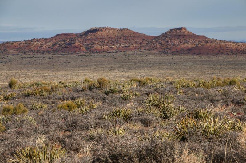 亚利桑那沙漠更加凉快的冬天 库存照片