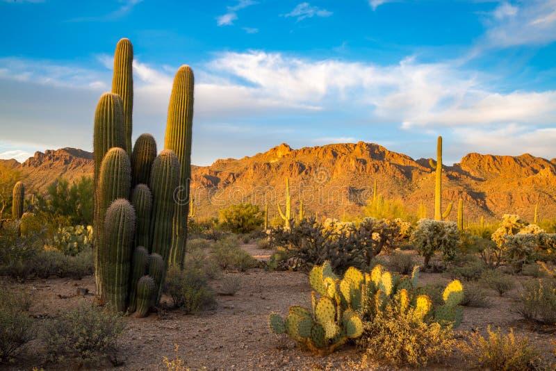 亚利桑那沙漠风景 免版税库存图片