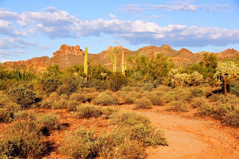 亚利桑那沙漠 免版税图库摄影