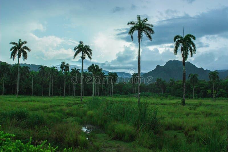 亚历山大Humbold国立公园在古巴,接近巴拉科阿和关塔那摩 库存图片