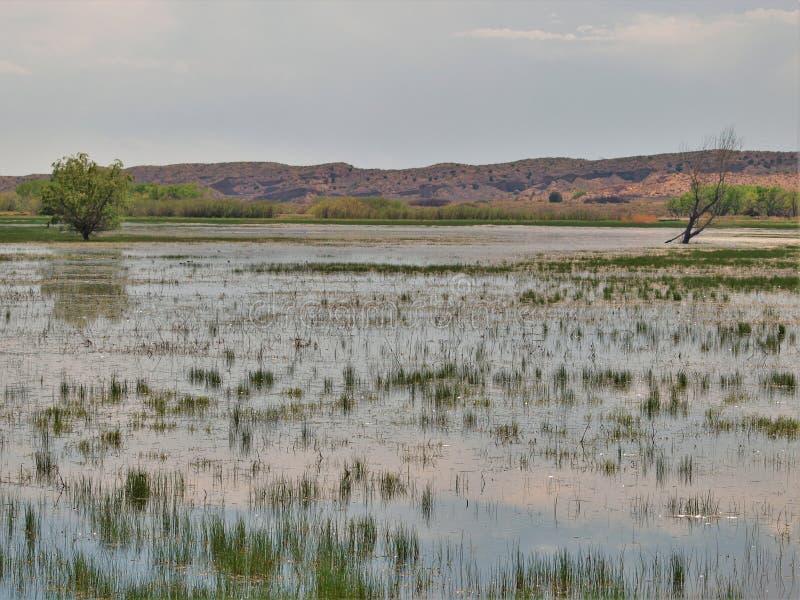 亚帕基印第安人树丛del国家避难所野生生物 库存照片