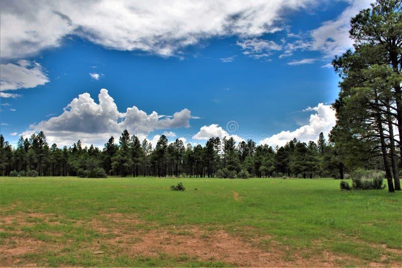 亚帕基Sitgreaves国家森林,亚利桑那,美国 免版税库存图片