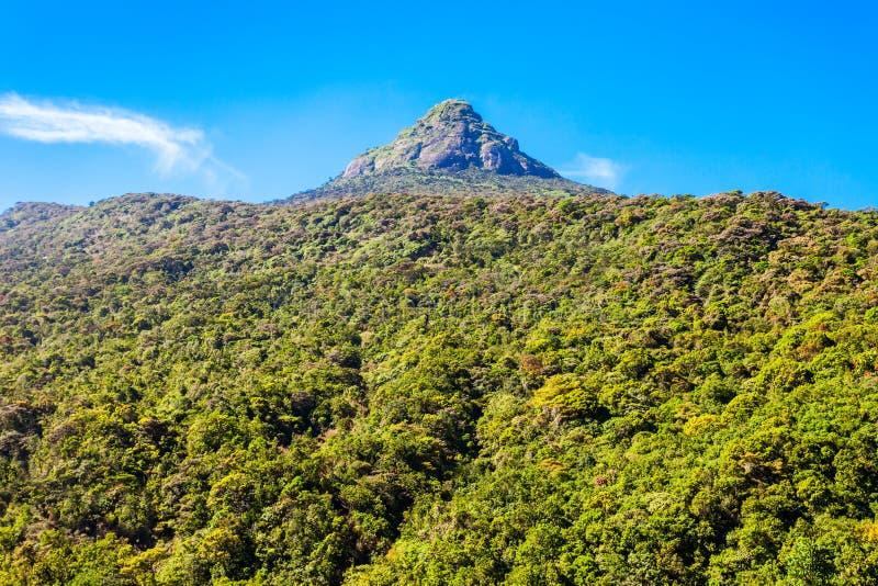 亚当斯峰顶,斯里兰卡 库存图片