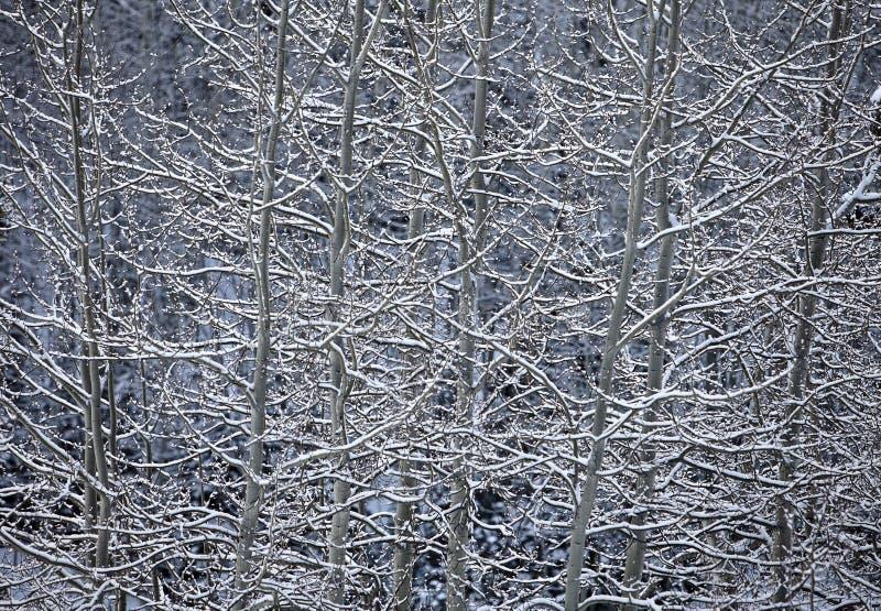 亚斯本和雪本质摘要 库存图片