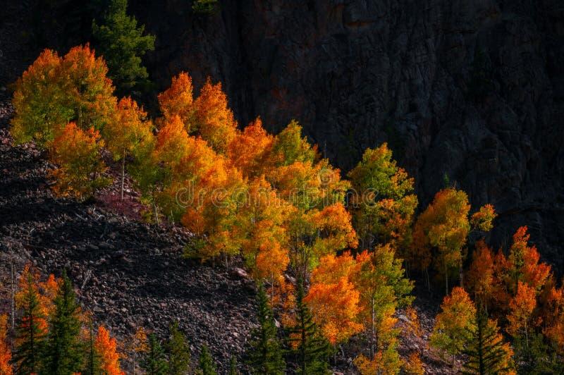 亚斯本树秋天颜色 图库摄影