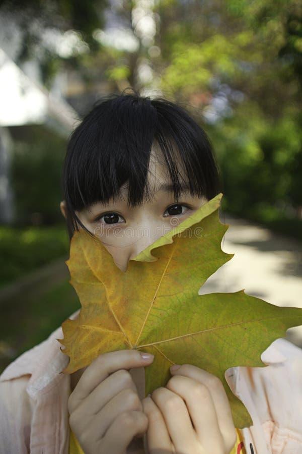 亚洲女孩叶子槭树 库存图片