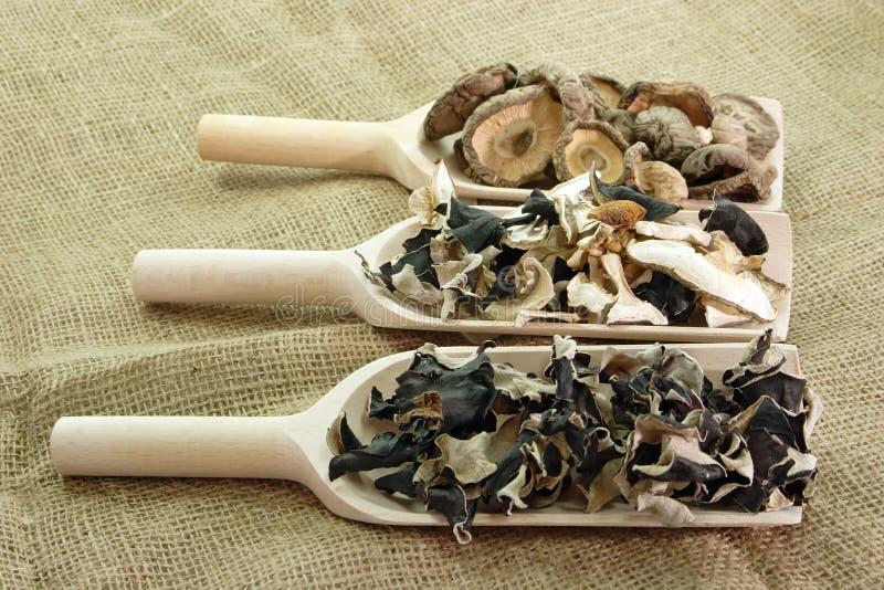 亚洲干蘑菇 免版税库存图片