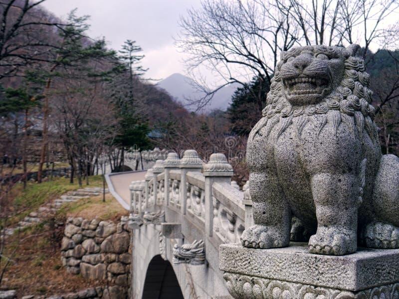 亚洲狮子在韩国 库存照片
