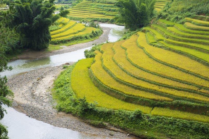 亚洲米领域通过收获季节在Mu Cang柴区,安沛市,越南 露台的稻田在米, wh广泛使用 库存照片