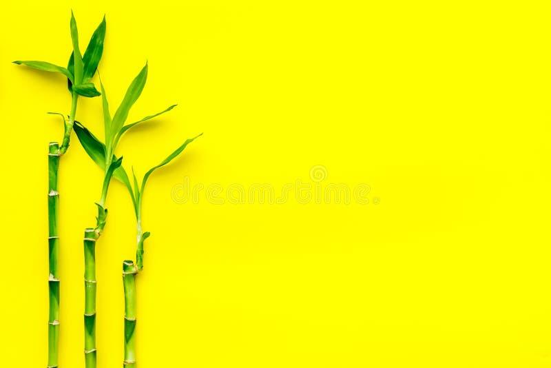 亚洲背景 汉语,日本背景 在黄色背景顶视图拷贝空间的竹分支 免版税库存照片