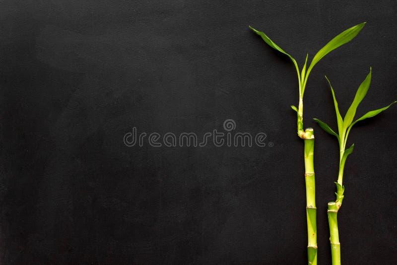 亚洲背景 汉语,日本背景 在黑背景顶视图拷贝空间的竹分支 库存图片