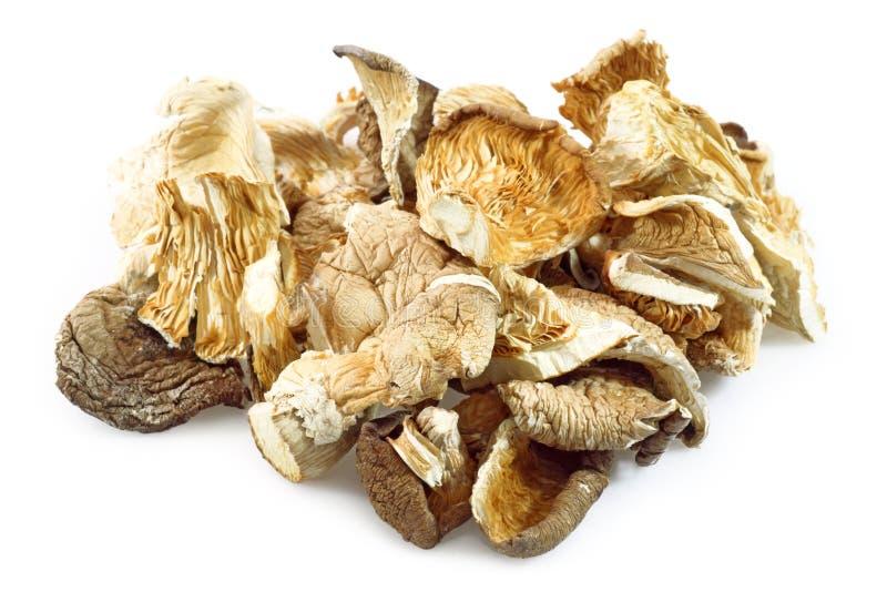 亚洲蘑菇 免版税库存图片