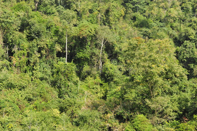 亚热带雨林 库存图片