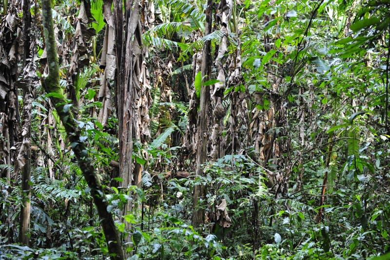 亚热带雨林 库存照片
