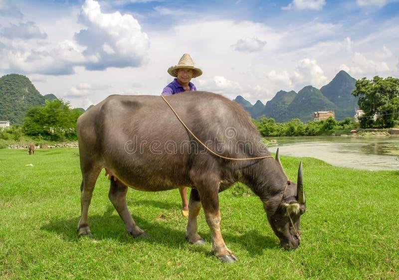 亚裔农夫摆在与他的水牛 美好的风景在阳朔,广西,中国 免版税库存照片